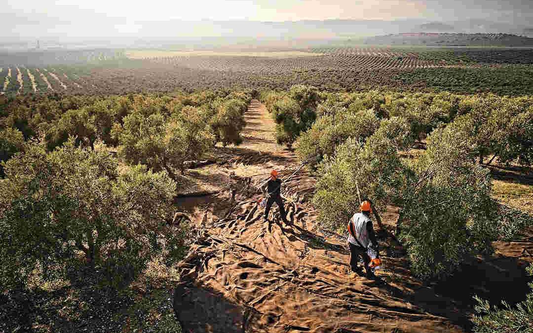 Vareadores de olivos: tipos y ventajas